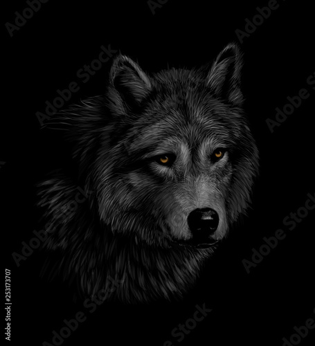 Portrait of a wolf head on a black background Wallpaper Mural