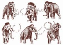 Graphical Vintage Set Of Mammoth , Retro Illustration