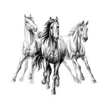 Three Horses Run Gallop On Whi...