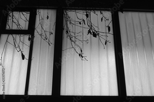 Montage in der Fensternische Darknightsky Glass night Window and branch of a tree