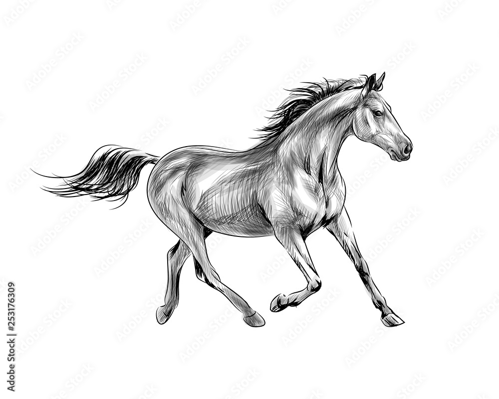 Fototapeta Horse run gallop on a white background. Hand drawn sketch