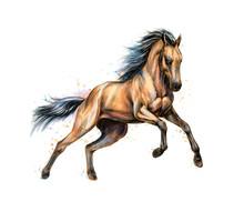 Horse Run Gallop From Splash O...