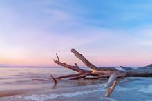 Log Lying On The Shore / Dawn On The Shore Early Spring Blue Shades
