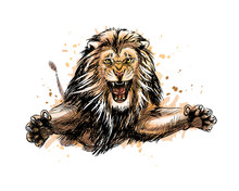 Portrait Of A Jumping Lion From A Splash Of Watercolor