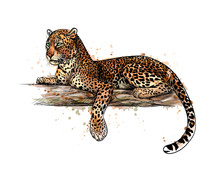 Leopard Is Lying On A Tree From A Splash Of Watercolor