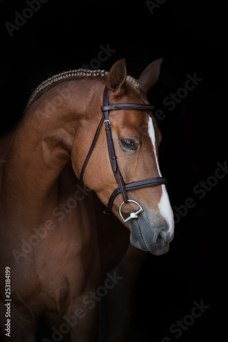 close up of braided hunter horse with bridle