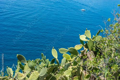 In de dag Canarische Eilanden Italy, Cinque Terre, Vernazza, a close up of a plant