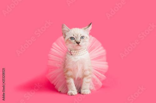 Fotografia Fancy white kitten playing dress-up princess, pink background.