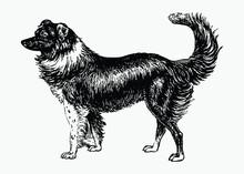 Dog Vintage Drawing
