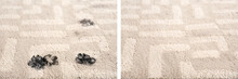 Trail Of Muddy Paw Prints On Beige Carpet