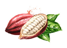 Cocoa Pods. Superfood. Waterco...