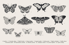 Set Butterflies. Vector Vintage Classic Illustration. Black And White