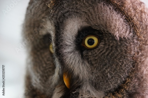 Garden Poster Owl Owl uil head hoofd close up closeup