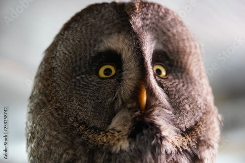 Photo Stands Owl Owl uil head hoofd close up closeup