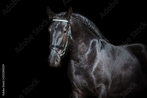Fototapety, obrazy: Horse portrait isolated  on black background