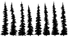 Set Of Silhouettes Of Thin Tall Firs.