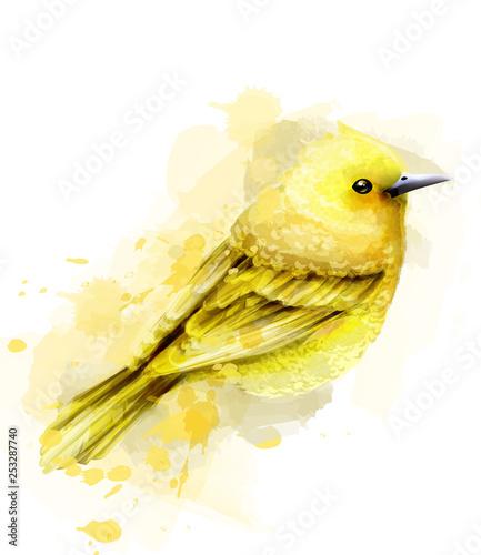 Valokuva Cute yellow bird watercolor Vector isolated on white