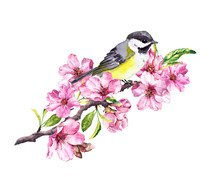 Song Bird On Cherry Blossom Br...