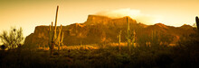 A Saguaro Cactus In The Landsc...
