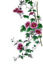 Watercolor With A Flowering Branch Ipomoea. Beautiful Mauve Flowers Of Morning Glory, Blooming Twig Of Convolvulus. Illustration Executed In Traditional сhinese Style, Isolated On White Background