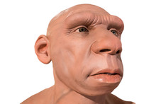 Life-sized Neanderthal Bust