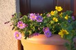Mix of colorful flowers in a flowerpot