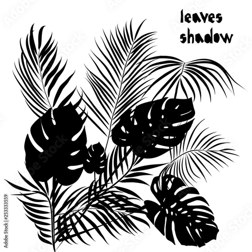 Pattern with black tropical monstera, areca leaves silhouette shadow isolated on white background Wallpaper Mural
