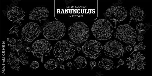 Obraz na plátně Set of isolated Ranunculus in 27 styles.