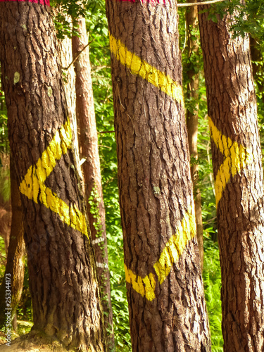 Painted forest in Oma, Basque Country, yelow square. Ibarrola Wallpaper Mural