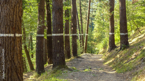 Photo Painted forest in Oma, Basque Country, white line.