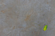 Folha verde solitária sobre concreto