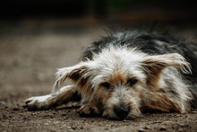 Stray, Diseased And Poorly Dog