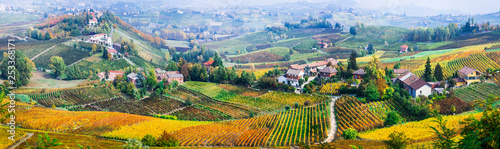 scenic nature. Golden vineyards of Piemonte. famous vine region of Italy
