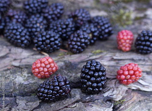 Fotografie, Obraz  Benefits Of Blackberries For Hair And Health The fruit is deep purple in color with smooth, fragile skin