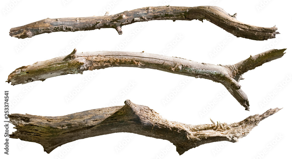 Fototapety, obrazy: Dry tree branch isolated on white background. Broken branches