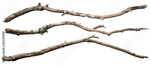 Valokuvatapetti Dry tree branch isolated on white background. Broken branches
