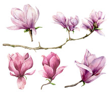 Watercolor Magnolia And Branch Set. Hand Painted Flowers Isolated On White Background. Floral Elegant Illustration For Design, Print.