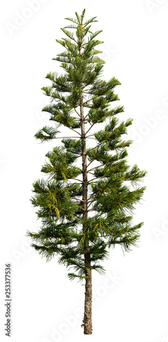 Fotomural Tree pine isolated on white background. Spruce