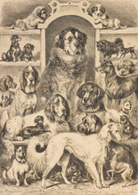 Breeds Of Dog - Illustration, Germany, 1870-1879, 19th Century, 19th Century Style, Ancient, Collection