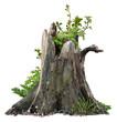 Leinwanddruck Bild - Old tree trunk. Dead tree isolated on white background. Barn tree. Stump isolated.