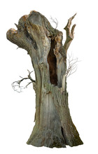 Old Tree Trunk. Dead Tree Isolated On White Background. Barn Tree. Stump Isolated.