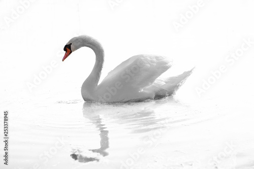 Spoed Fotobehang Zwaan A swan is swimming on the lake