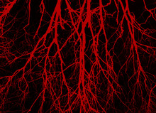 Blood Veins Background