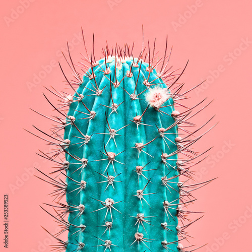Spoed Foto op Canvas Cactus Cactus green colored on coral background. Minimalism. Contemporary Art gallery Style. Creative fashion concept. Close-up tropical fashionable plant, pastel color