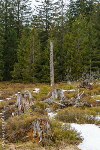 Photo  Geschädigte Bäume im Schwarzwald