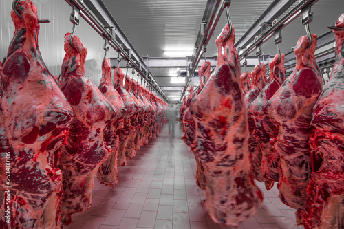 Freshly slaughtered halves of cattle hanging on the hooks in a refrigerator room of a meat plant for further food processing. Halal cutting. - 253400106