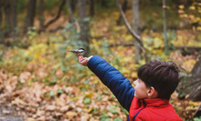 Close-up Of Boy Feeding White Breasted Nuthatch At Forest During Autumn