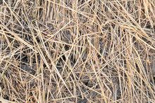 The Ground Covered With Straw