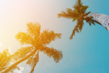 Coconut Palm Tree Beach Summer Concept