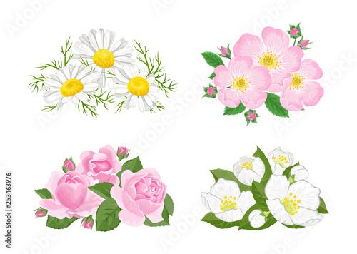 Flowers set. Bouquet of сhamomile, wild rose, dogrose